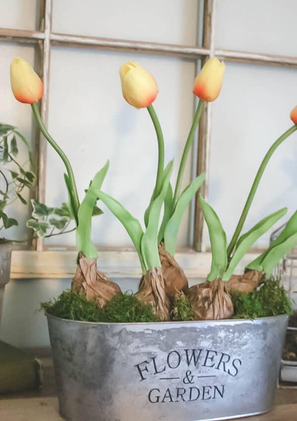 DIY | Tulip Bulb Planter
