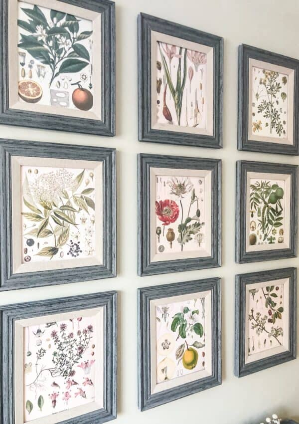 botanical print gallery wall