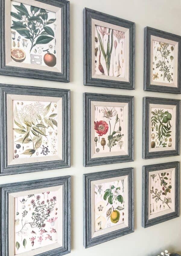 botanical print gallery wall