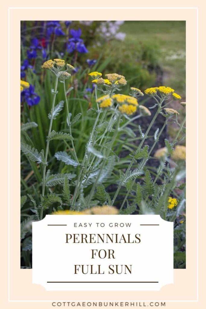 perennials for full sun