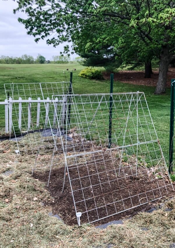 vegetable garden | cucumber trellis