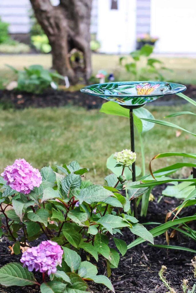 hydrangeas and bird bath