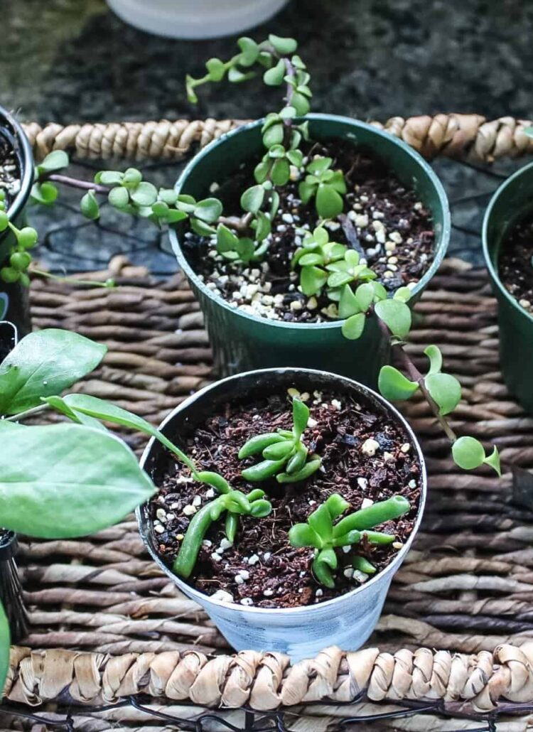 easy ways to propagating plants